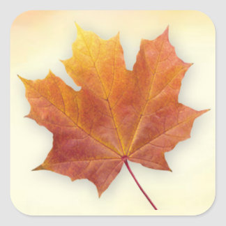 Red and gold autumnal maple leaf Sticker
