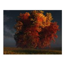 autumn, tree, prairie, clouds, landscape, desktop wallpaper, Postcard with custom graphic design