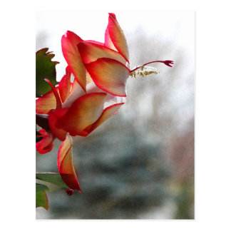 Red and Golde Christmas Cactus Postcard