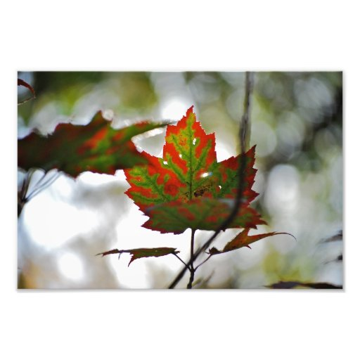 Red and Green Autumn Leaf Photo Art