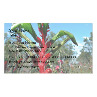 Red and green kangaroo paw flower business card