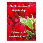 Red and Green Leaves Postcard
