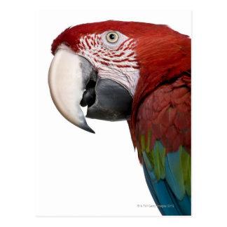 Red-and-green Macaw - Ara chloropterus Postcard