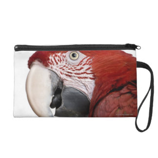 Red-and-green Macaw - Ara chloropterus Wristlet Clutch