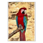 Red And Green Macaw Greeting Cards