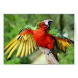 Red-and-green Macaw on perch Cards