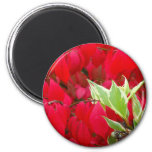 Red and Green Refrigerator Magnets