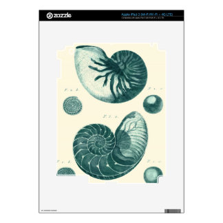 Red and Green Seashell Art iPad 3 Decal