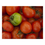 Red and Green Tomatoes with a for Sale Sign Poster