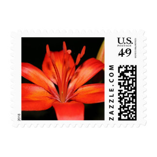 Red and Orange Asiatic Lily Closeup Stamps