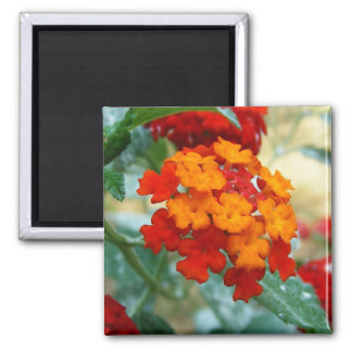 Red and Orange Lantana Magnets