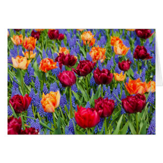Red And Orange Tulips Card