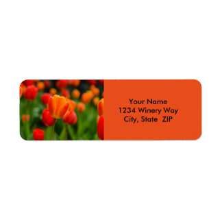 Red and Orange Tulips in the Garden Label