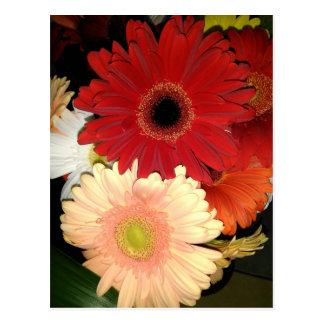 Red and Peach Gerbera Daisy Postcard