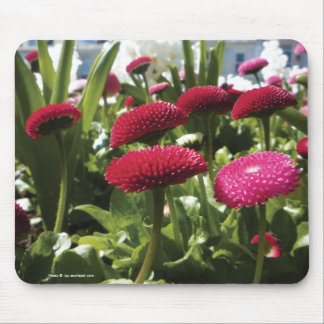 Red and Pink Bellis Perennis Daisies Mousepad