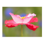 Red and pink flower post cards