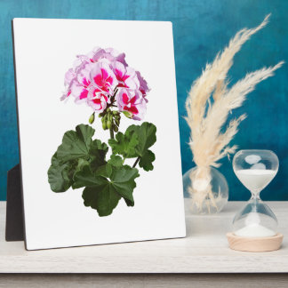 Red And Pink Geranium Plaque