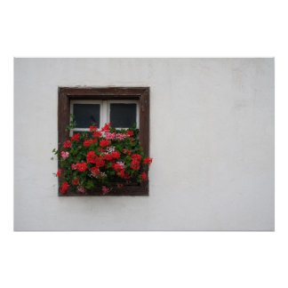 Red And Pink Pelargonium Poster
