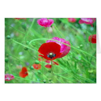 Red and Pink Poppies Card
