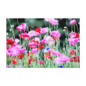 Red and Pink Poppies Wrapped Canvas Canvas Print
