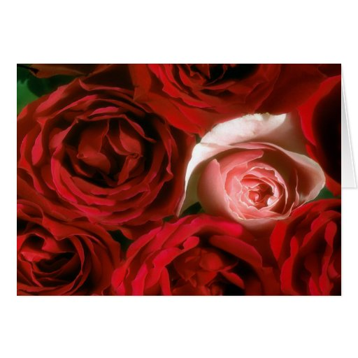 RED AND PINK ROSES CARD