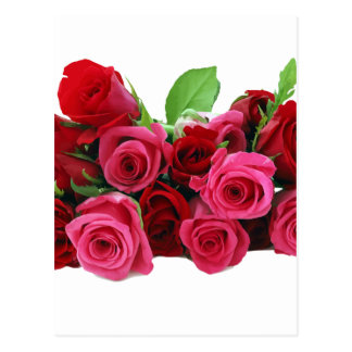 Red and Pink Roses Postcard