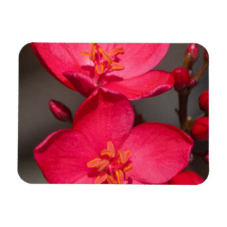 Red and Pink Tropical Fiji Flowers Magnet