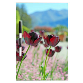 Red and Pink Tulip Blossoms Dry Erase White Board
