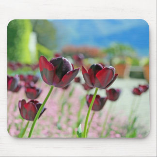 Red and Pink Tulip Blossoms Mouse Pad