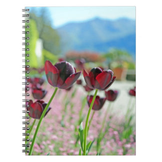 Red and Pink Tulip Blossoms Spiral Notebook