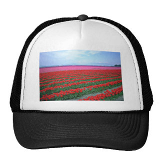 Red And Pink Tulip Field flowers Hat
