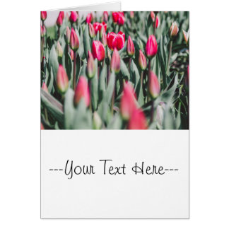 Red and Pink Tulips, Flower Field in Spring Greeting Card