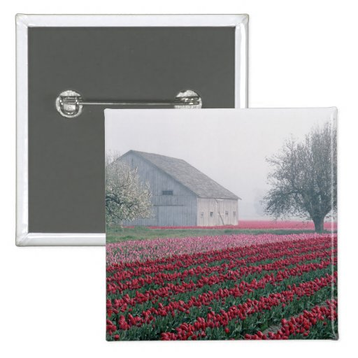 Red and pink tulips greet the day on a misty pinback button