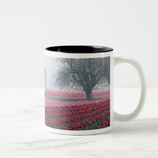 Red and pink tulips greet the day on a misty Two-Tone coffee mug
