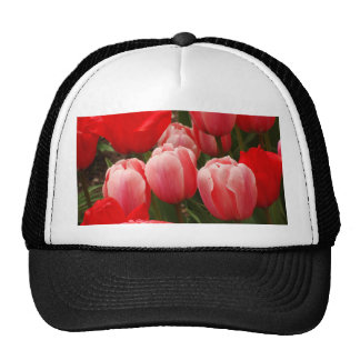 Red and Pink Tulips Hat