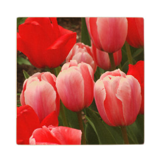 Red and Pink Tulips Wood Coaster