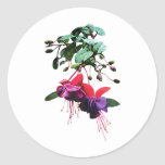 Red and Purple Fuschia Round Stickers