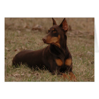 Red and Rust Doberman Card