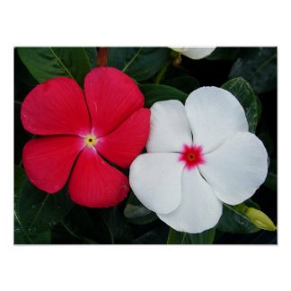 Red and Vinca Flowers Poster