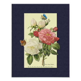 Red and White Botanical Roses on Blue Poster