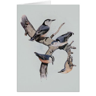Red and White Breasted Nuthatches Card