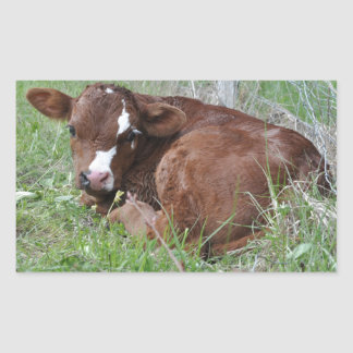 Red and white calf rectangular sticker