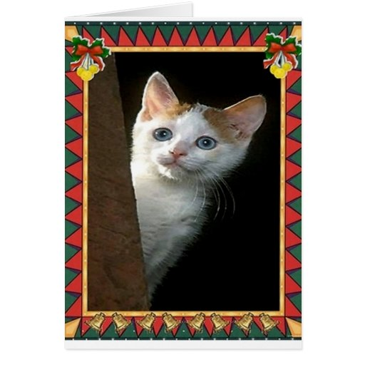 Red And White Cat Blank Christmas Card