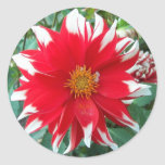 Red and White Dalhia Floral Stickers