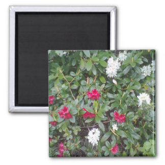 red and white flower 2 inch square magnet