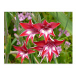 Red and White Flowers Postcard