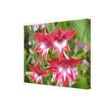Red and White Gladiolas Summer Garden Floral Canvas Print