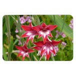 Red and White Gladiolas Summer Garden Floral Magnet