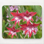 Red and White Gladiolas Summer Garden Floral Mouse Pad