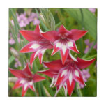 Red and White Gladiolas Summer Garden Floral Tile